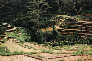 Tegalallang, Bali I