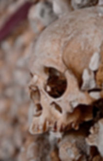 HP_Skull_Head_f.jpg