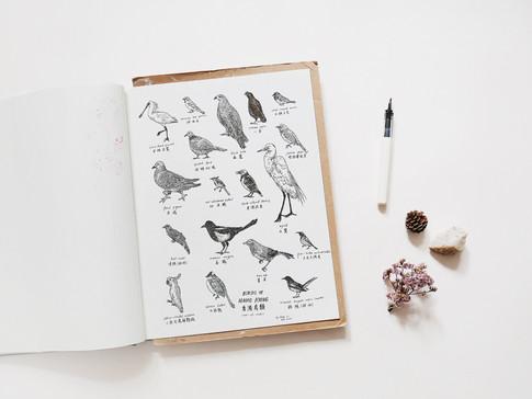 Hong Kong Birds / 2017