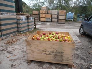 A car full of apples