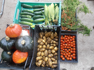 A day of harvesting (and a bit of weeding!)