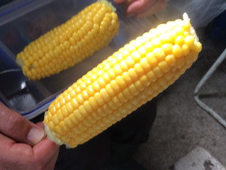 Sweetcorn for lunch!