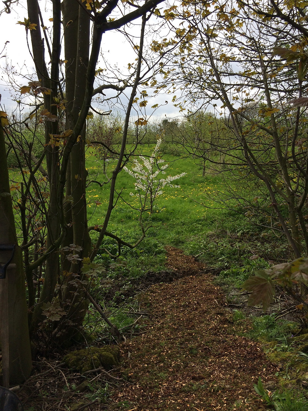 new woodland path