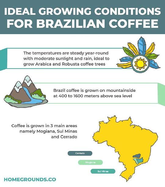 brazilian-growing-conditions-904x1024.jp