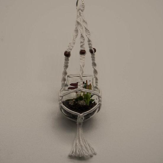 Macrame Hanging Glass Terrarium