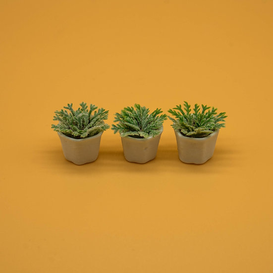 3 Potted Grasses