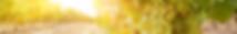 grape banner-1-2880x420.png