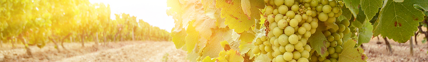 grape banner-1-2880x420.png
