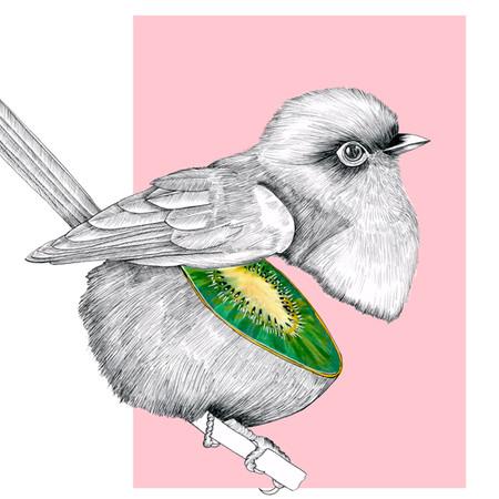 Birds Estampa