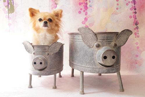 Geniale Schweine – Blumentöpfe in 2 Größen