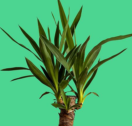 Hero plant image.png