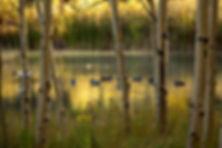 Aspen Frame.jpg