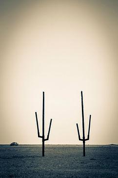 Twin Cacti.jpg