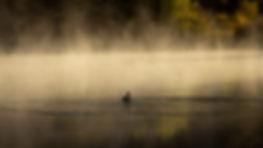 Lone Duck.jpg