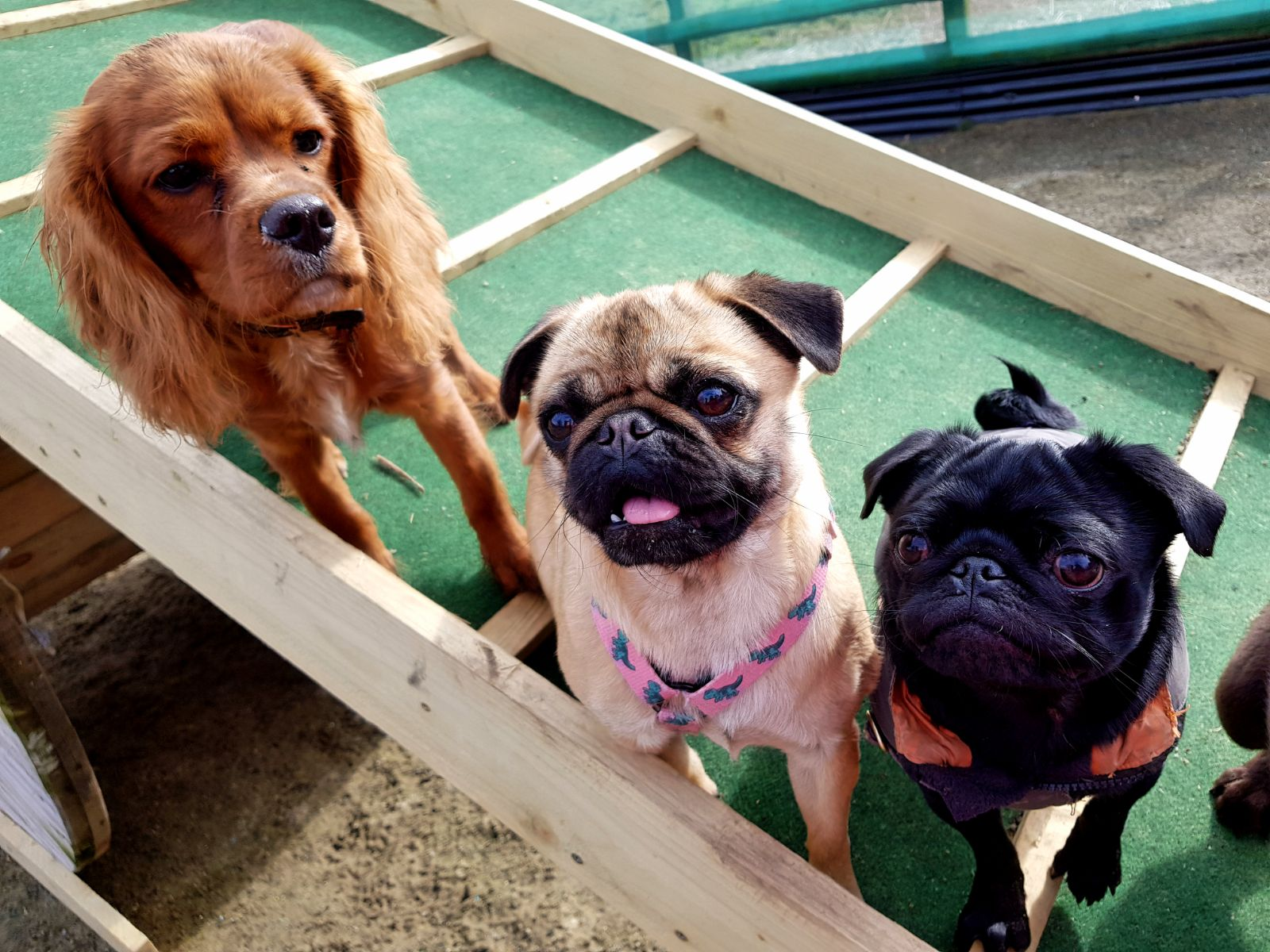Doggy Daycare | Queens Park