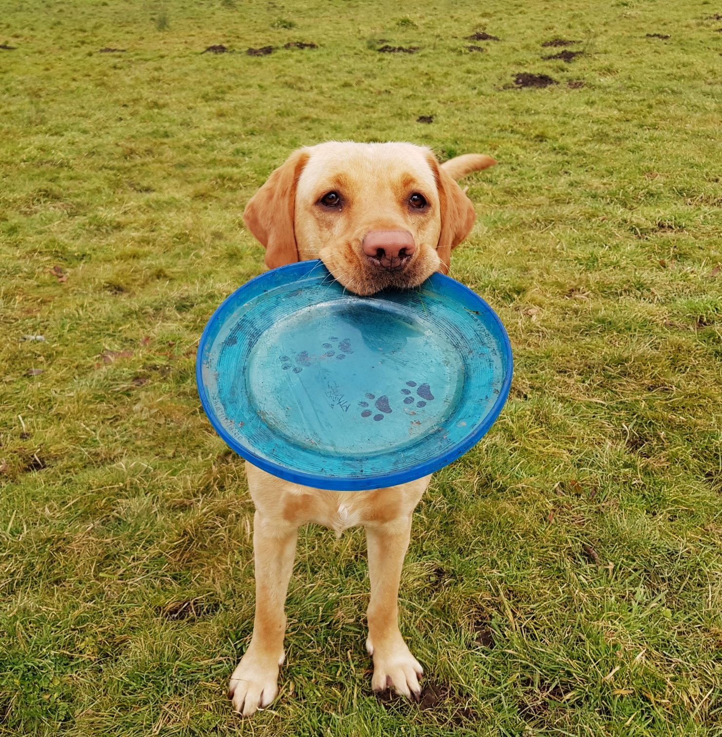 Doggy Daycare | NW6 | West Hampstead