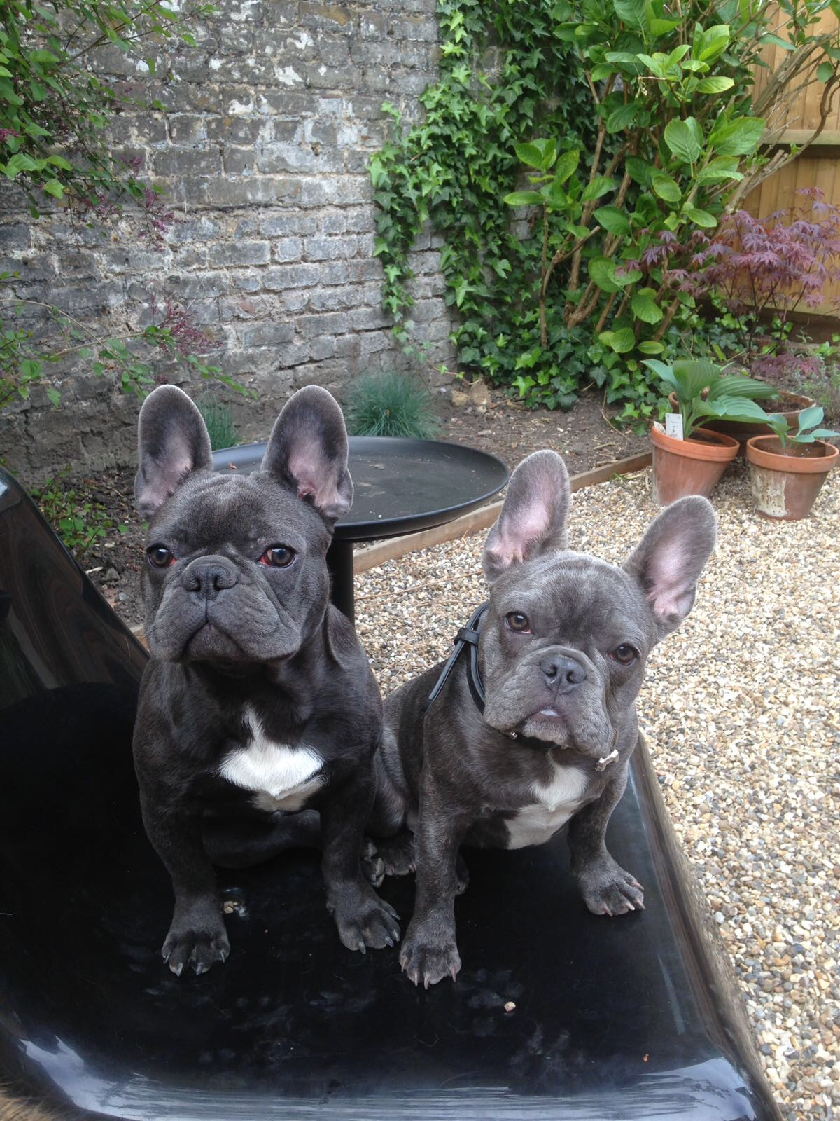 Puppy Day Care | NW10 | Harlesden