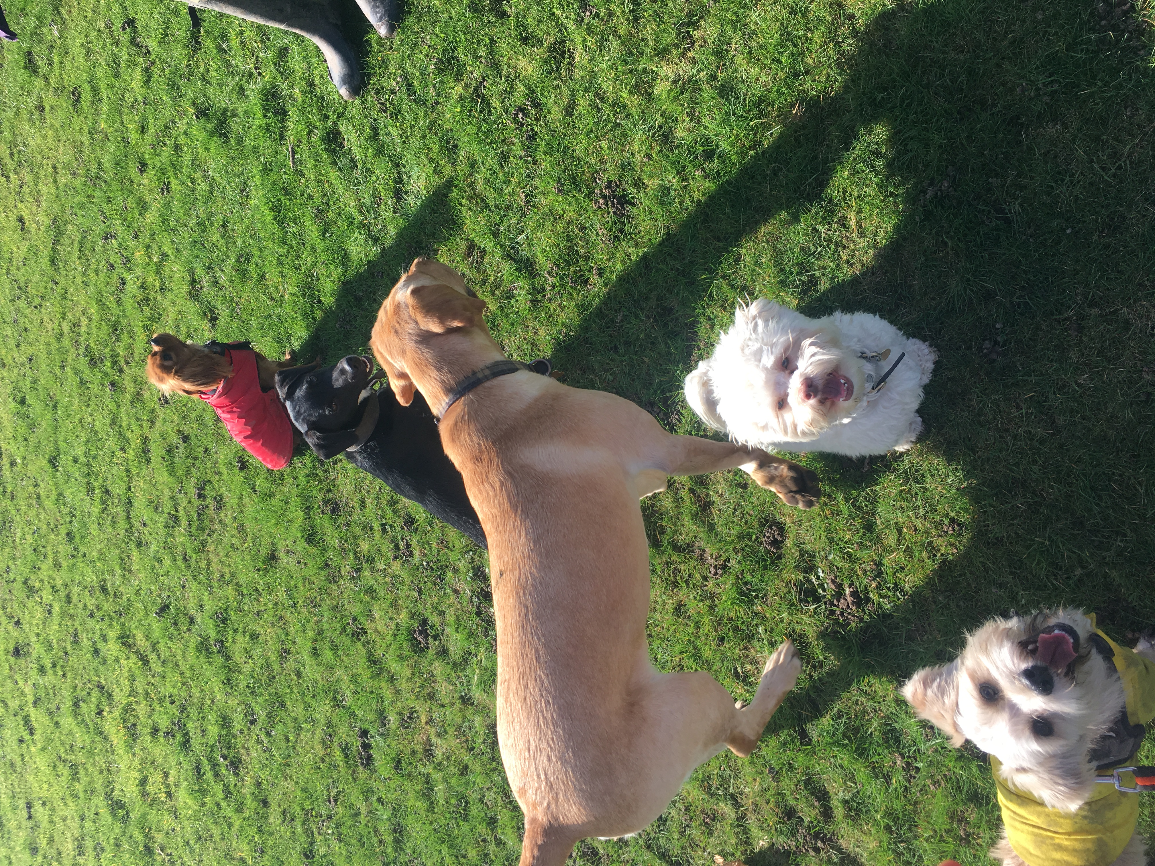 Dog Day Care | NW6 | West Hampstead