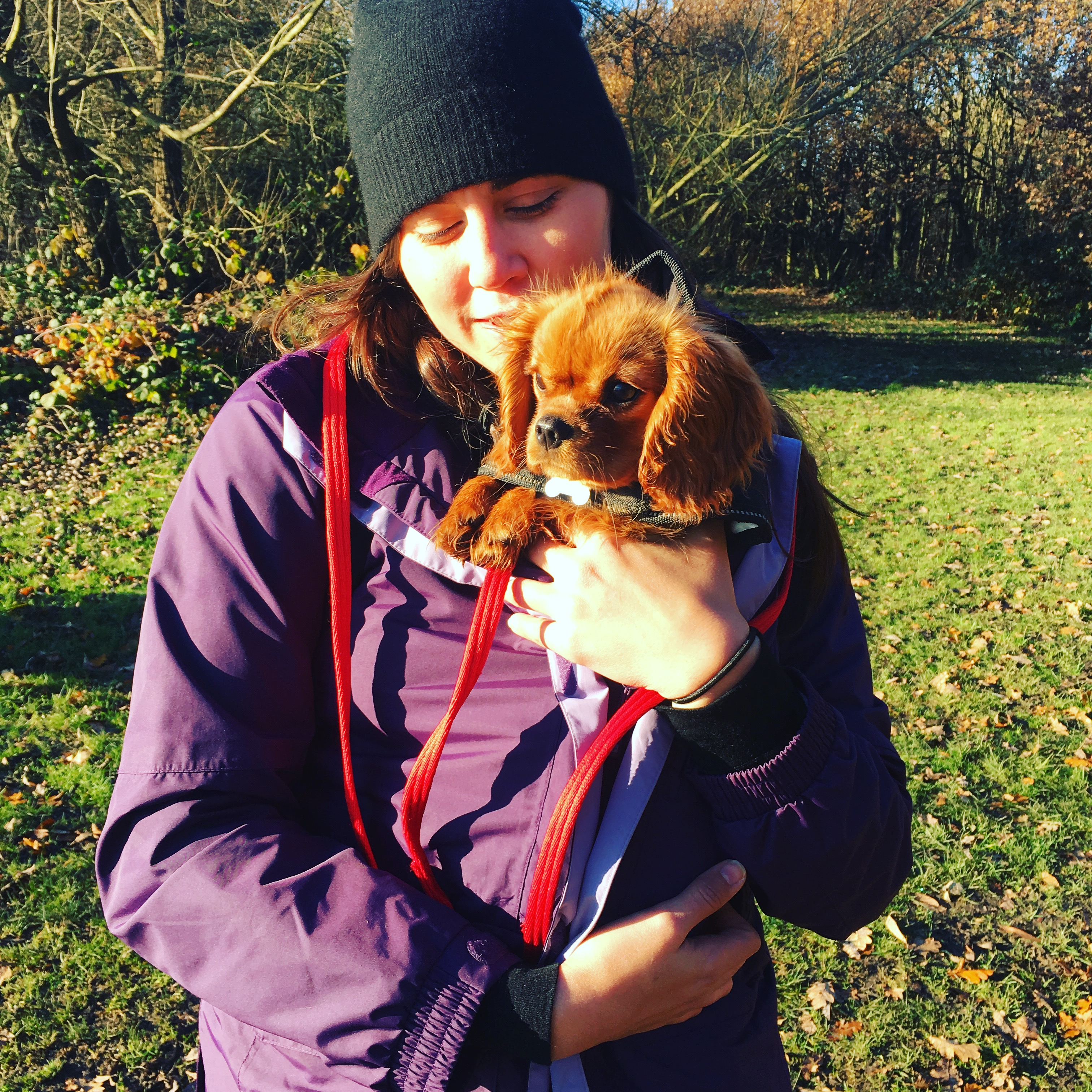 Puppy Day Care | West Hampstead NW6