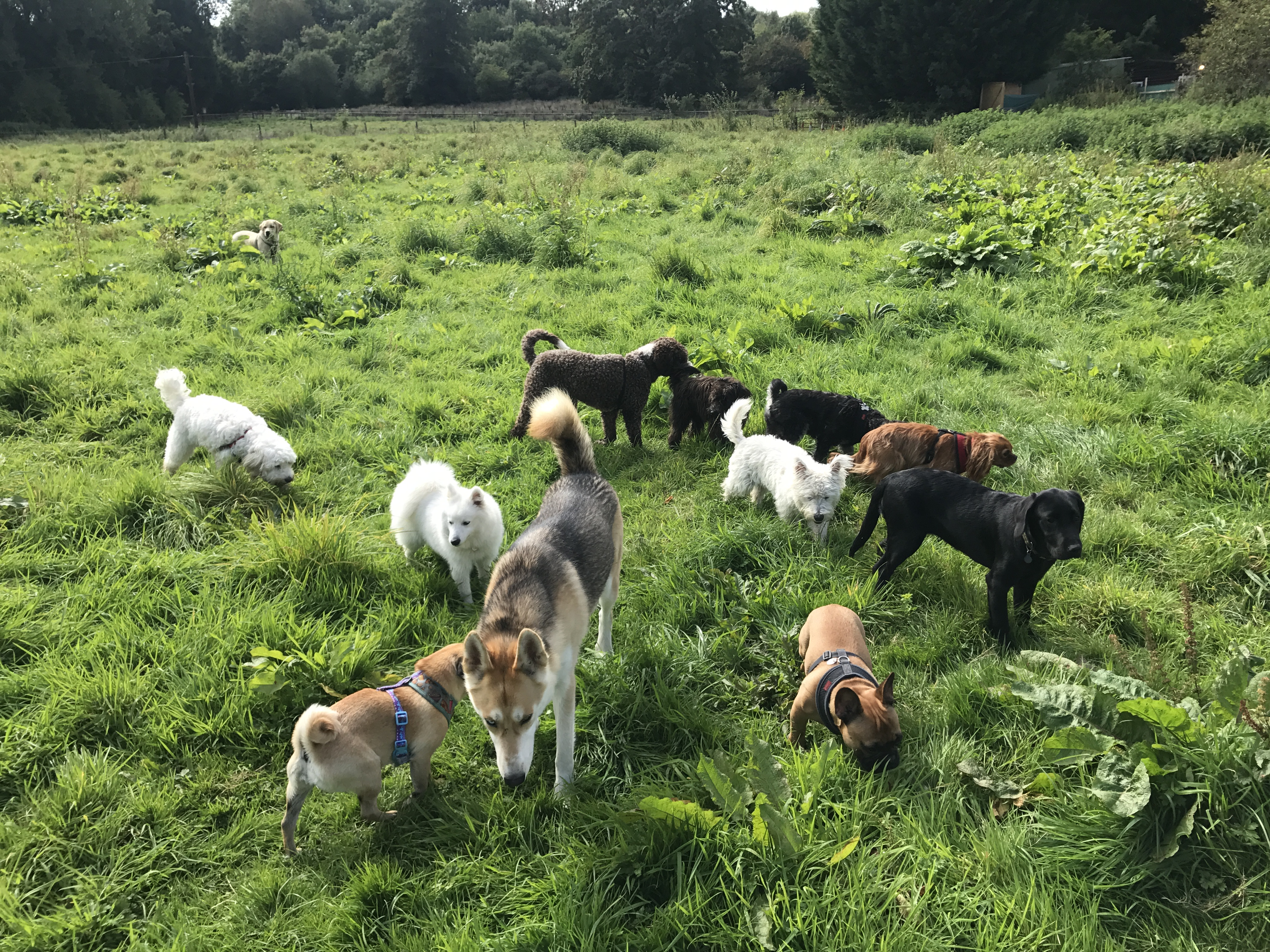 Doggy Daycare | W9 | Maida Vale