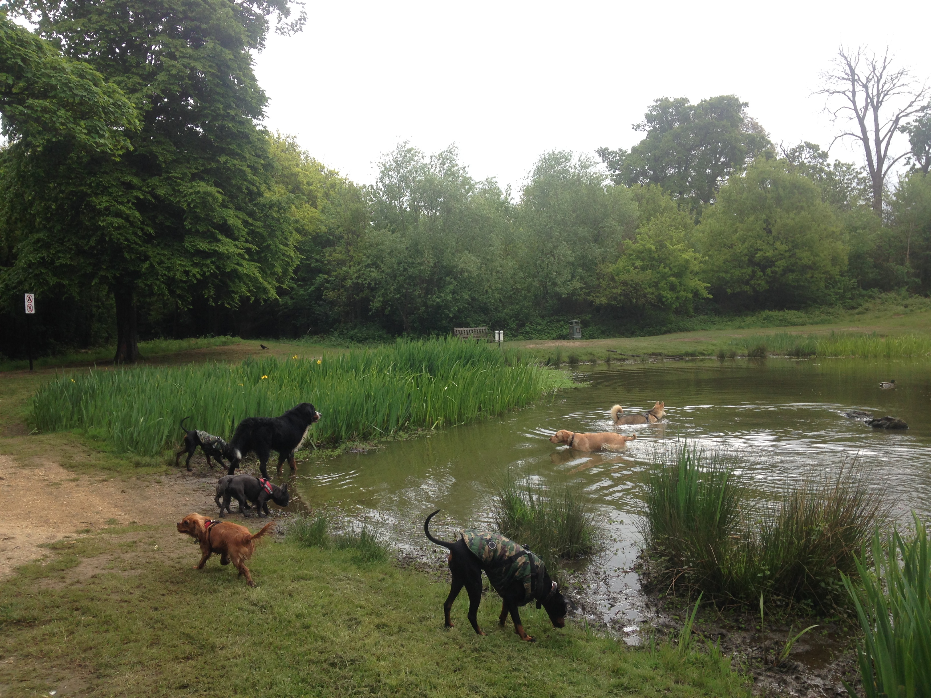 Doggy Day Care | Hyde Park | W2