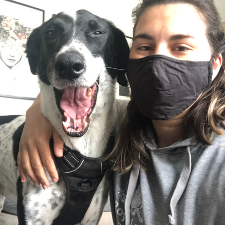 Dogs and PPE