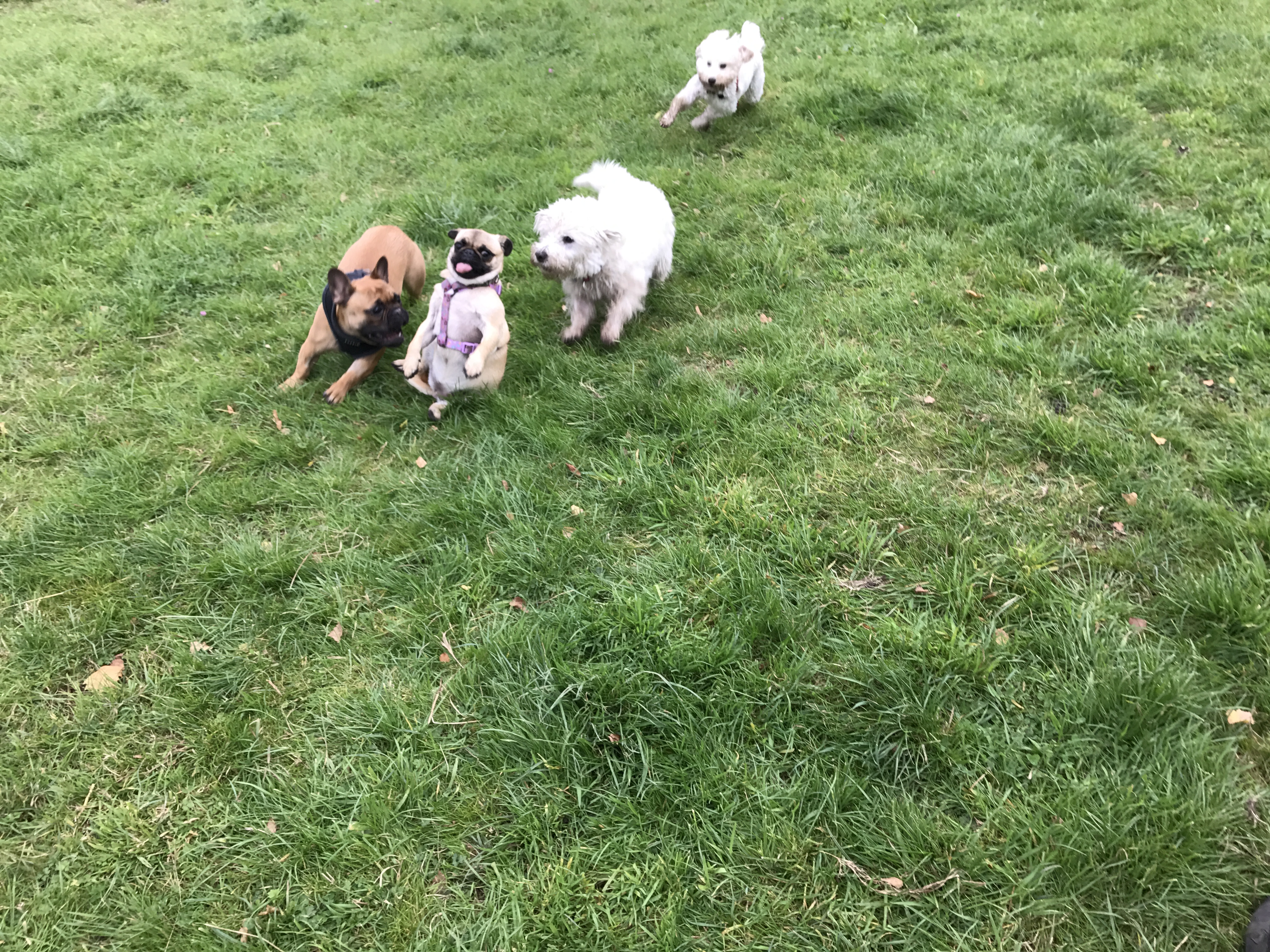 Doggy Daycare | Willesden