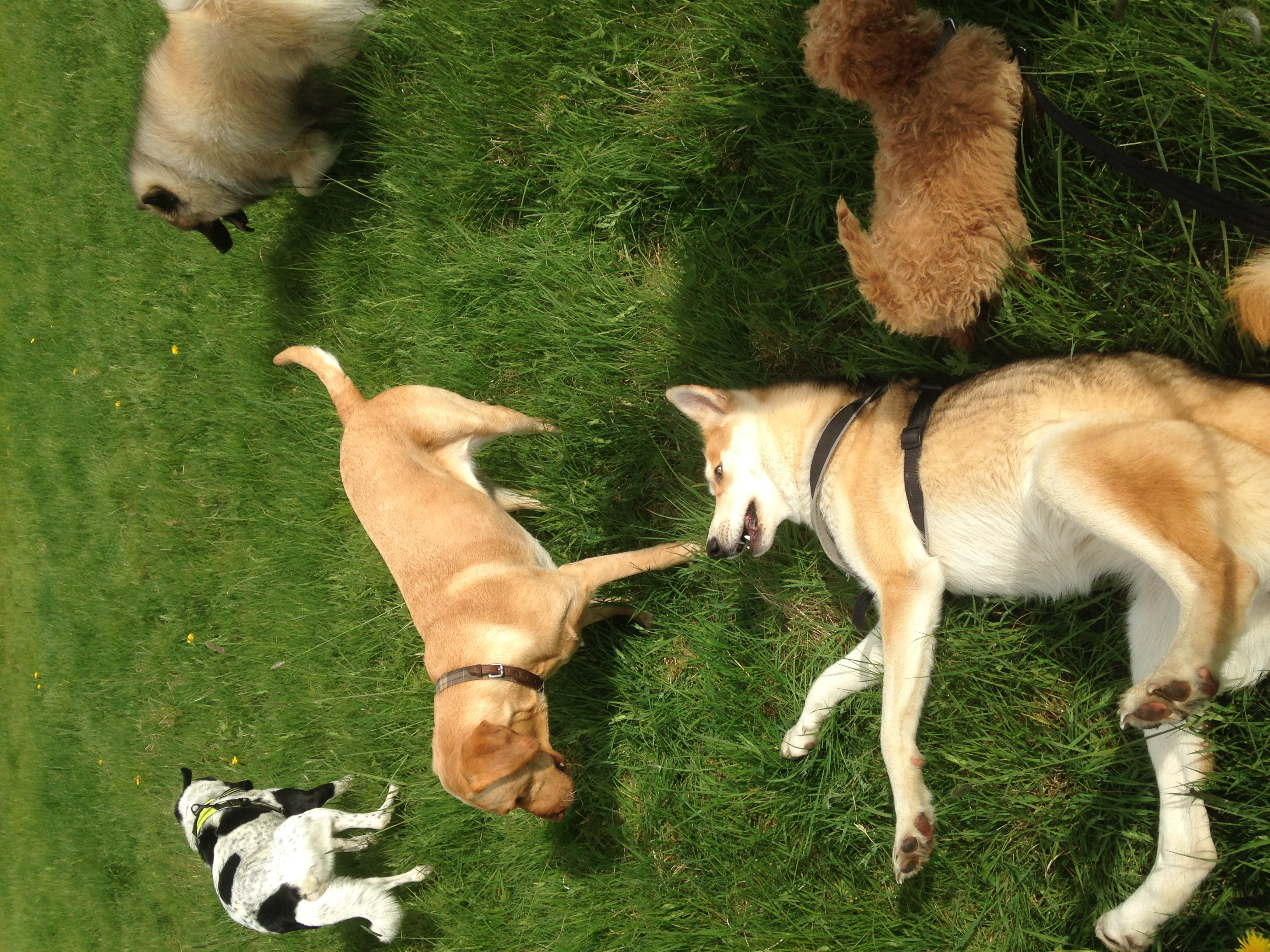 Doggy Daycare | Hampstead Heath NW3