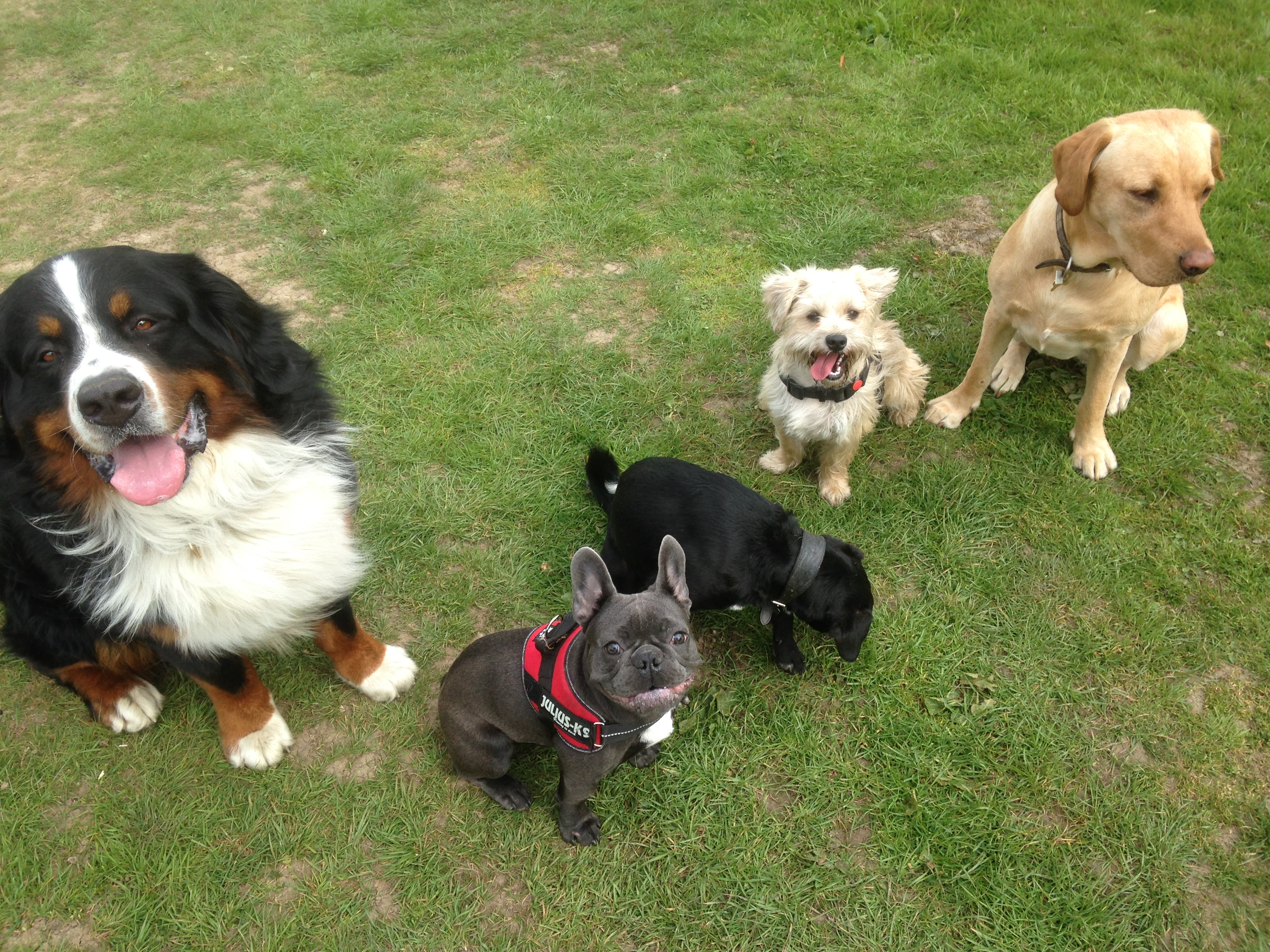 Doggy Daycare | NW3 | Hampstead
