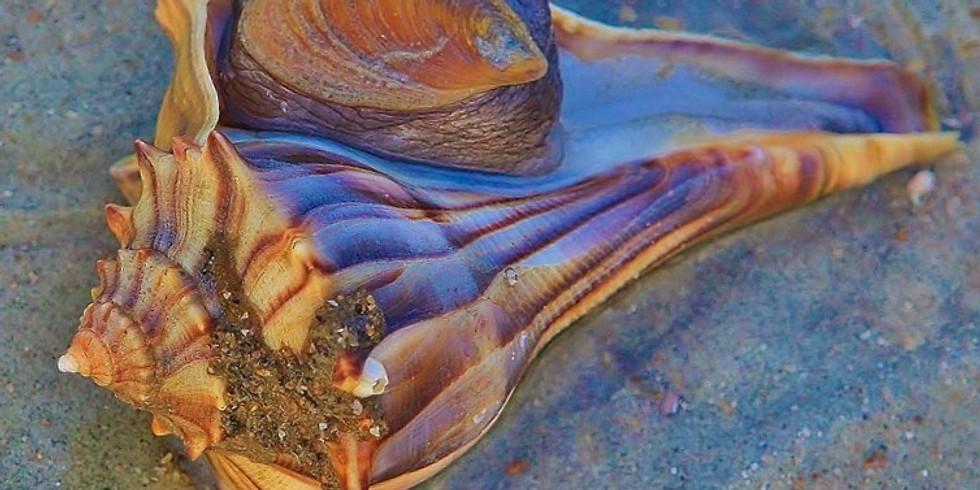 Shari's Seashell by the Seashore