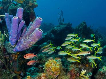 IYORBank_ReefAnimals_TheOceanAgency_07.jpg