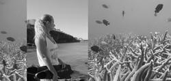 LTDN banner Gen coral