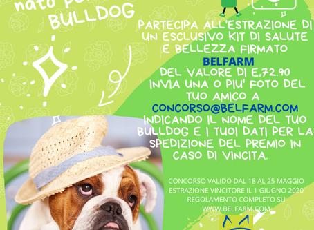 """Concorso """"PRIMAVERA2020"""" Nato per essere Bulldog"""