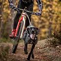 bikejoring abcaes