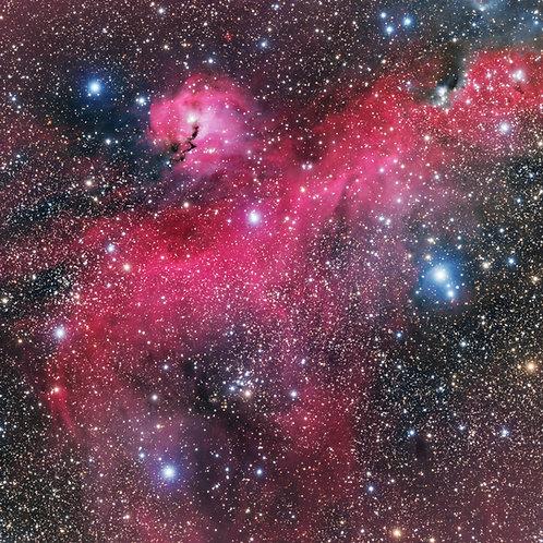 The Seagull Nebula