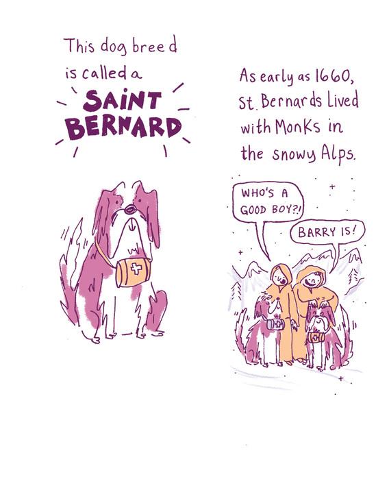 st bernard 1.jpg