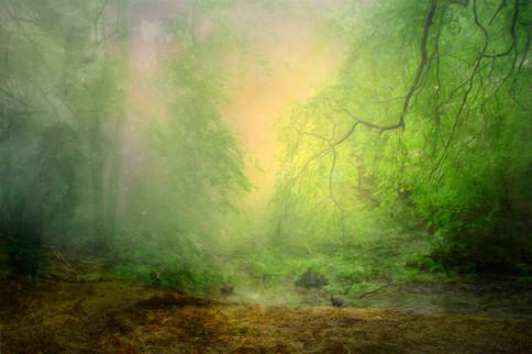 Receding Mist