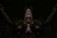 Ancient Paper Warrior