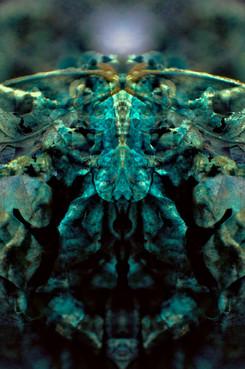 Oak Crustacean