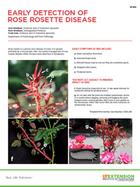 Early Detection of Rose Rosette Disease Factsheet