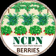 ncpnberrieslogo.png