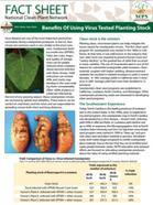 Benefits of Using Virus Tested Planting Stock Factsheet