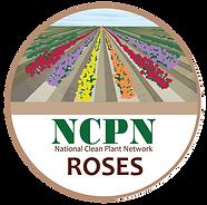 NCPN-Roses-logo.png