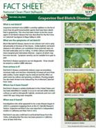 Red Blotch Disease Factsheet