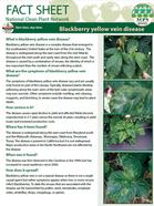 Blackberry Yellow Vein Disease Factsheet