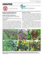 Grape Leafroll Disease Factsheet