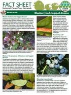 Blueberry Red Ringspot Disease Factsheet
