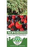 NCPN-Berries Brochure