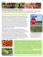 Sweetpotato Feature Edition Newsletter