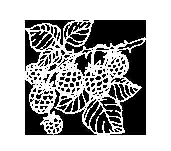 berriesdrawing3_03.png
